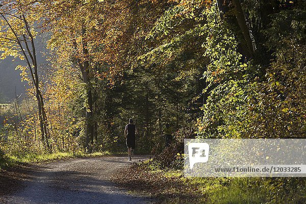 The Forest Road in Autumn  Munich  Germany