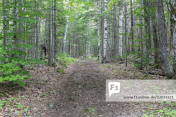 The Cobble Hill Trail in Landaff  New Hampshire.