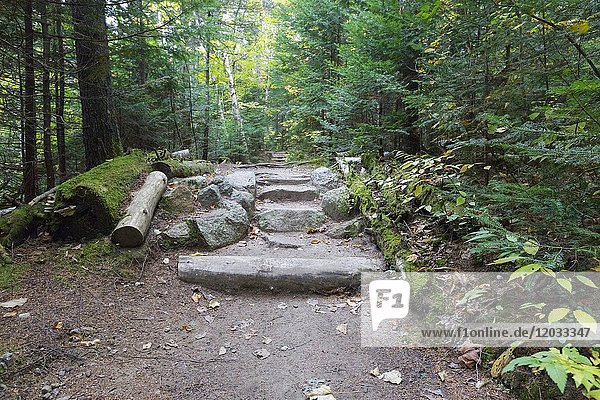 Natural looking stone steps along Zealand Trail in Bethlehem  New Hampshire USA during the autumn months.