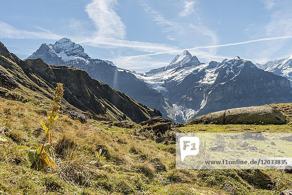 Wanderin auf einem Felsen  hinten schneebedeckte Eiger-Nordwand  Eiger  Mönch  Jungfrau  großes Fiescherhorn  Grindelwald  Bern  Schweiz  Europa