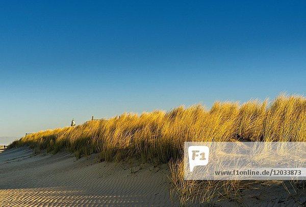 Sanddünen an der Ostsee  Warnemünde  Mecklenburg-Vorpommern  Deutschland  Europa