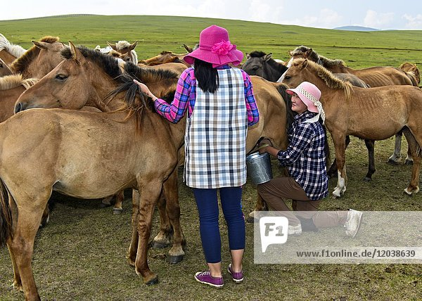 Two young women with fashionable hats milking a mare  Mongolia.