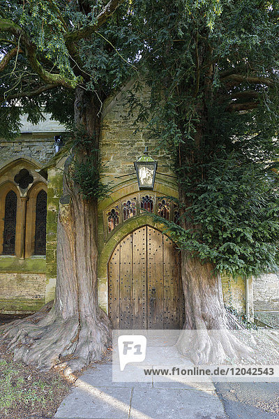 Yew trees and door of St. Edward's Church  Stow-on-the-Wold  Cotswolds  Gloucestershire  England  United Kingdom  Europe
