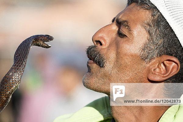 Snake charmer  Djemaa el Fna  Marrakech  Morocco  North Africa  Africa