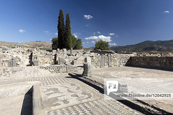 Mosaics in the Roman city of Volubilis  UNESCO World Heritage Site  near Moulay Idris  Meknes  Morocco  North Africa  Africa