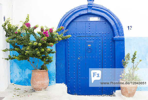 Pots and plants against blue and white wall in Kasbah des Oudaya (Kasbah of the Udayas)  Rabat  Morocco  North Africa  Africa