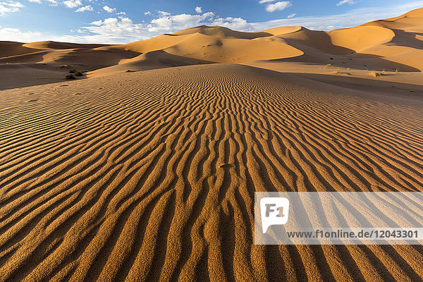 Wide angle view of the ripples and dunes of the Erg Chebbi Sand sea  part of the Sahara Desert near Merzouga  Morocco  North Africa  Africa