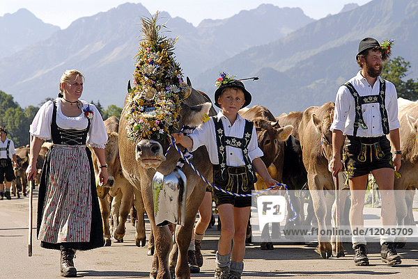 Viehscheid  the Annual Driving down of the Cattle from the summer mountain pastures into the valley  Schoellang  Allgau  Bavaria  Germany  Europe
