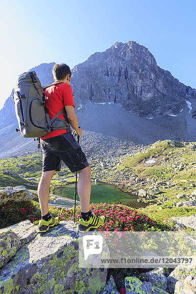 Hiker at Julier Pass with Piz Polatschin in the background  St. Moritz  Engadine  Canton of Graubunden  Switzerland  Europe