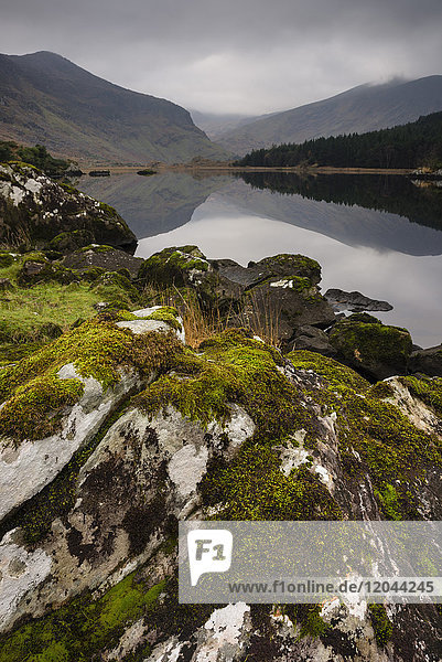 Moss covered rock  mountains and reflections in Cummeenduff Lake  Black Valley  Killarney  County Kerry  Munster  Republic of Ireland  Europe