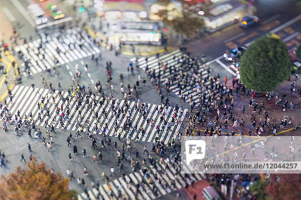 Shibuya Crossing  centre of Shibuya's fashionable shopping and entertainment district  Shibuya  Tokyo  Japan  Asia