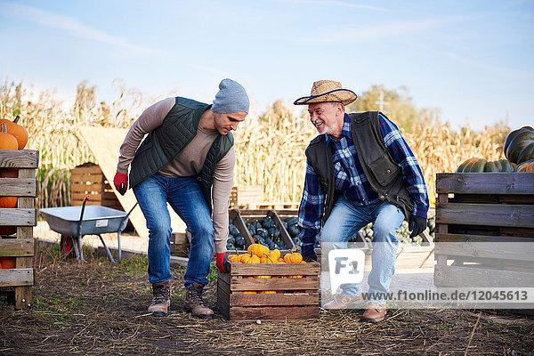 Landwirte tragen Kürbiskisten