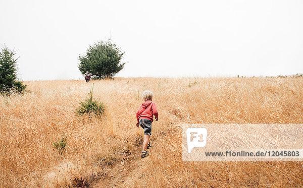 Boy in foggy field landscape,  Fairfax,  California,  USA,  North America