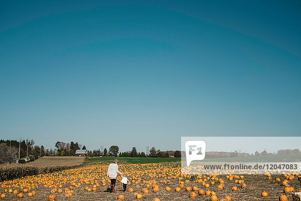 Mother and daughter in field of pumpkins  Oshawa  Canada  North America