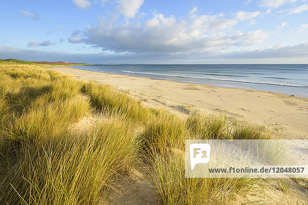 Sand dunes with dune grass on the beach at Bamburgh along the North Sea in Northumberland  England  United Kingdom