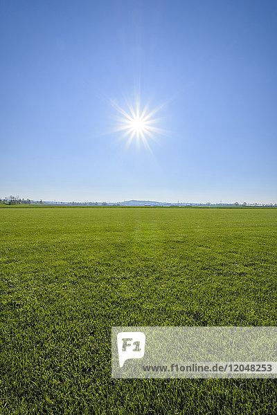Green Grass with Blue Sky and Sun  Gunzenhausen  Weissenburg-Gunzenhausen  Bavaria  Germany