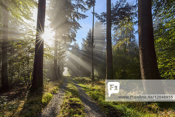 Forest path with morning mist and sun beams in the Odenwald hills in Hesse  Germany
