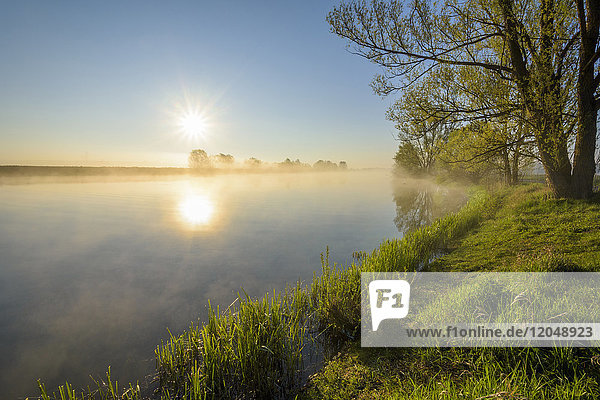 Lakeside with Sun and Morning Mist  Streudorf  Lake Altmuhlsee  Weissenburg-Gunzenhausen  Bavaria  Germany