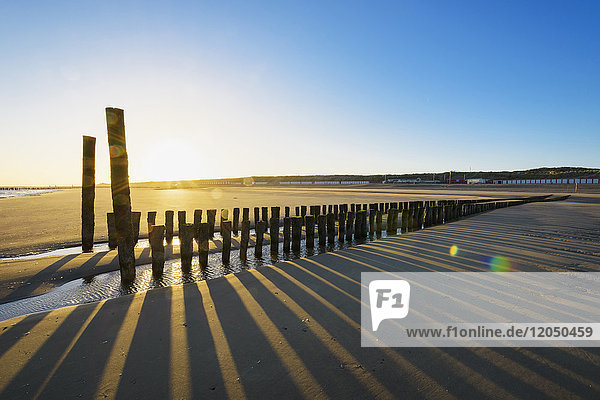 Wooden Breakwater on Beach at Low Tide at Sunrise  Domburg  North Sea  Zeeland  Netherlands