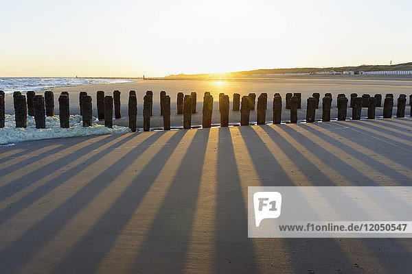 Wooden Breakwater on Sandy Beach at Low Tide at Sunrise  Domburg  North Sea  Zeeland  Netherlands