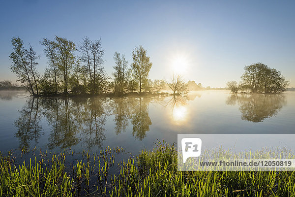 Lakeside with Island  Sun and Morning Mist  Streudorf  Lake Altmuhlsee  Weissenburg-Gunzenhausen  Bavaria  Germany