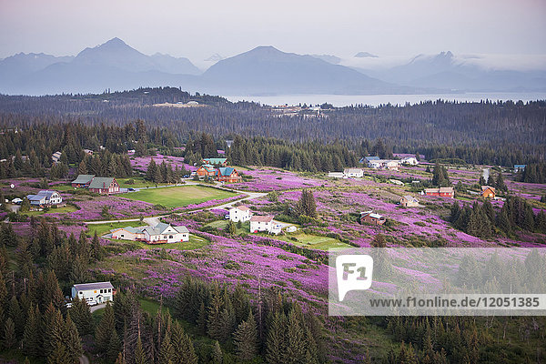 Aerial View Of Diamond Ridge And Fields Of Fireweed With The Kenai Mountains In The Background  Southcentral Alaska  USA