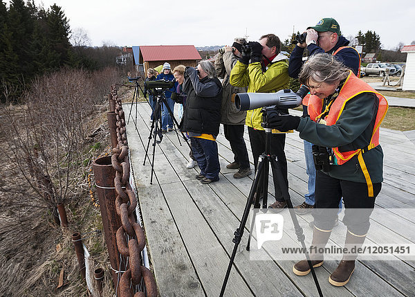 Birdwatchers And Photographers At The Cordova Shorebird Festival  Southcentral Alaska  USA