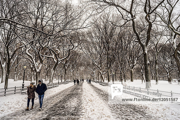 Snow-Covered Trees In The Mall  Central Park; New York City  New York  United States Of America