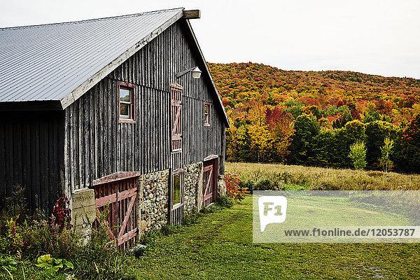 Barn With An Autumn Coloured Forest; Dunham  Quebec  Canada