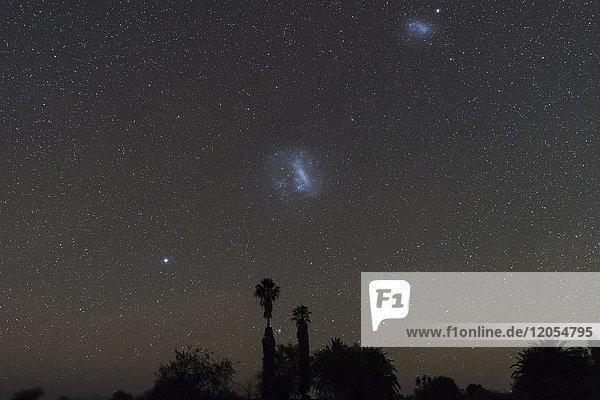 Namibia  Region Khomas  bei Uhlenhorst  Astrofoto  Sternenkette Canopus  Große Magellansche Wolke und Kleine Magellansche Wolke mit Palmen im Vordergrund