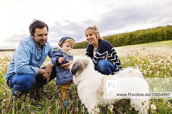 Süßer kleiner Junge mit Eltern und Hund im Löwenzahnfeld Süßer kleiner Junge mit Eltern und Hund im Löwenzahnfeld