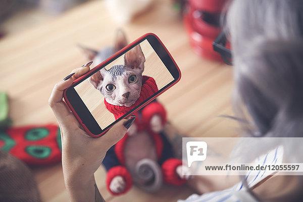 Frau macht Handyfoto von Sphynx-Katze mit Pullover