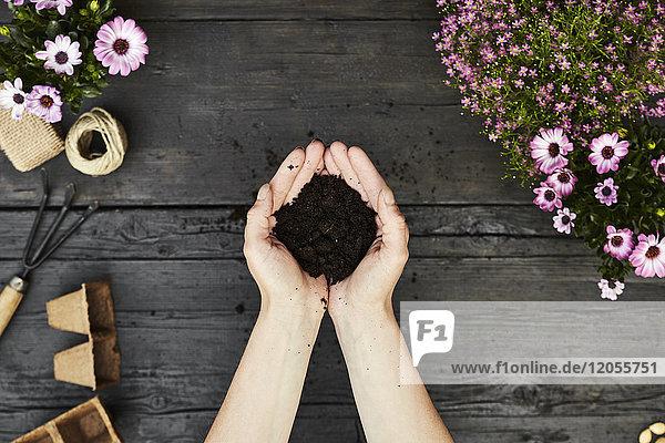 Frauenhände mit Gartenerde