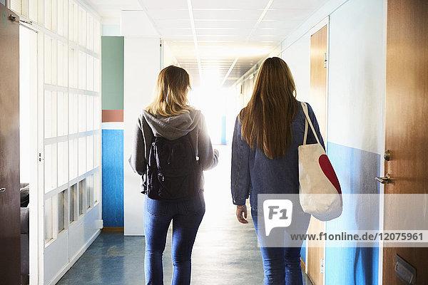 Rückansicht von Freunden  die an einem sonnigen Tag im Flur der Universität spazieren gehen.
