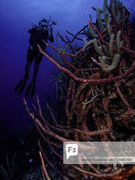Caribbean Sea Los Roques  woman Scuba-Diver underwater photographer Tour  Underwater  Venezuela