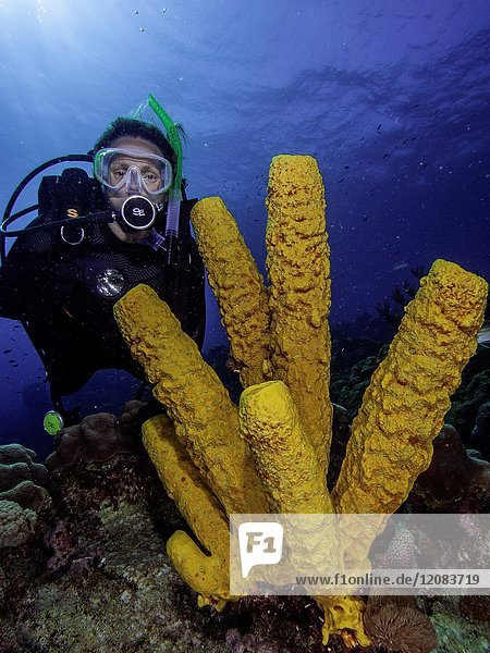 Caribbean Sea Los Roques  woman Scuba-Diver underwater photographer Tour  Underwater  Venezuela  Yellow Tube Sponge -Aplysina fistularis-