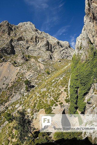 Coma de n'Arbona  Casas de Nieve o Cases de Neu  término municipal de Fornalutx  paraje natural de la Sierra de Tramuntana  Mallorca  Balearic islands  Spain.