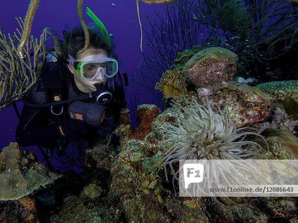 Caribbean Sea  Los Roques Venezuela  woman Scuba-Diver underwater photographer Tour    Underwater  Venezuela  Sponge