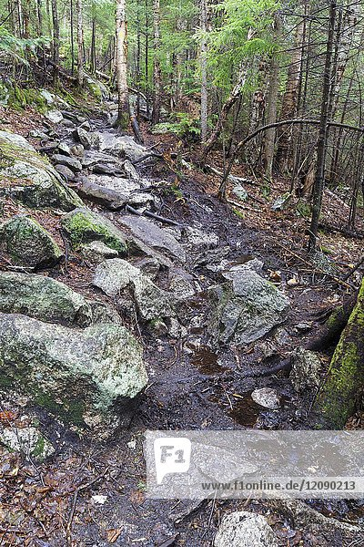 A wet area along the Mt. Tecumseh Trail in Waterville Valley  New Hampshire during the spring of 2017 that is in desperate need of drainage work.