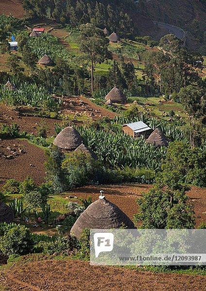 Gurage houses in the mountain  Gurage Zone  Butajira  Ethiopia.