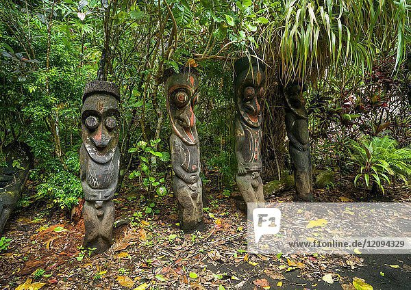 Fern tree grade figures in the jungle  Ambrym island  Olal  Vanuatu.