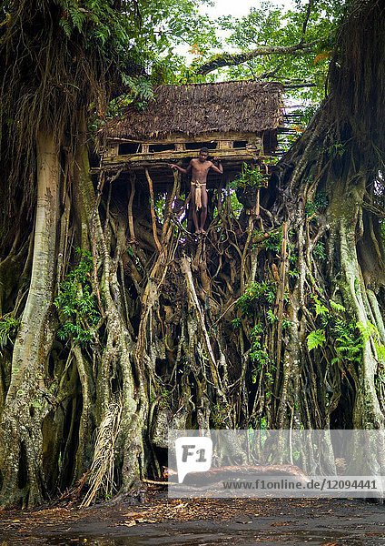 Teenage boy standing in front of a circumcision house in a giant banyan tree  Tanna island  Yakel  Vanuatu.