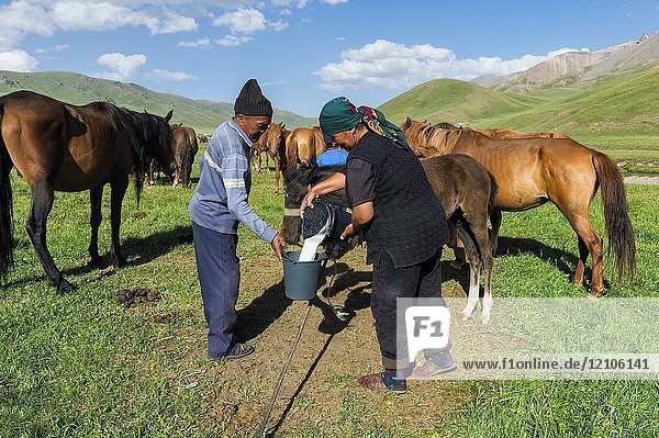 Couple of Kyrgyz nomads milking a mare on mountain pastures  Song Kol Lake  Naryn province  Kyrgyzstan  Central Asia.