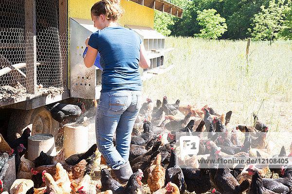 Frau füttert Freilandhühner mit goldenen Kometen und schwarzen Sternen auf Biobauernhof