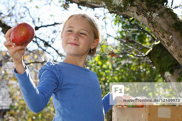 Junges Mädchen pflückt Äpfel vom Baum