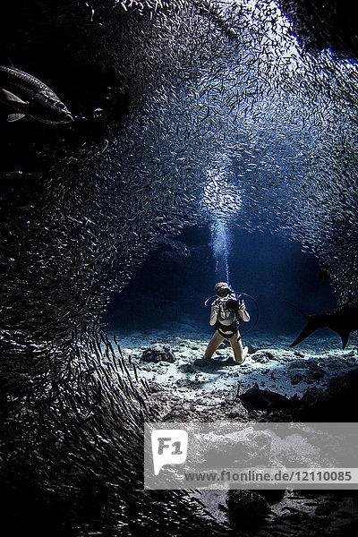 Taucher beim Fotografieren von Seelöwen