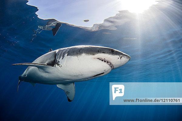 Hai schwimmt im Meer unter Sonnenstrahlen