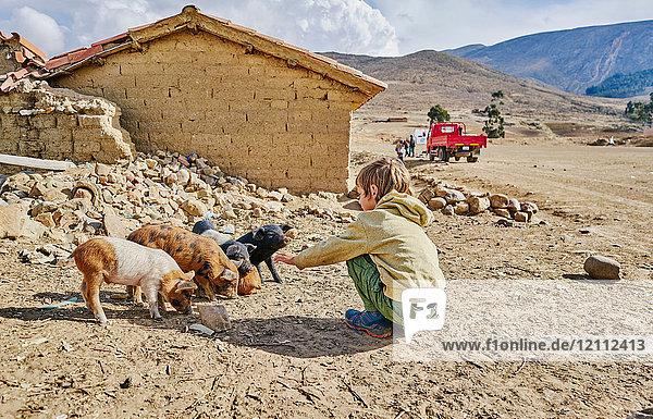 Boy petting piglets  Tarabuco  Chuquisaca  Bolivia  South America