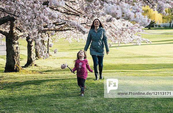 Mädchen schlendert mit der Mutter im Park und schaut zur Kirschblüte