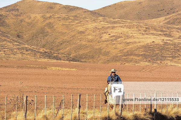 A gaucho is riding his horse along his property of bare desert hills; Potrerillos  Mendoza  Argentina